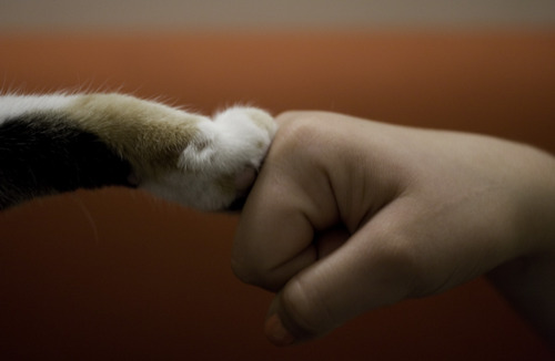 dog fist bump